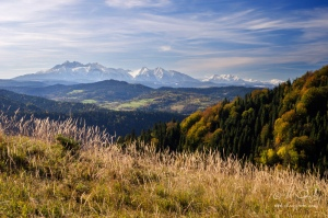 Výhľad z Lesníckeho sedla na Tatry