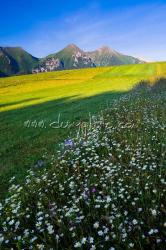 Ždiarské polia, v pozadí Belianske TatryBelianske Tatry