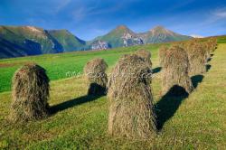 Ždiarské polia, v pozadí Belianske Tatry