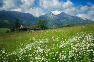 Rozkvitnutá lúka pod Belianskymi Tatrami