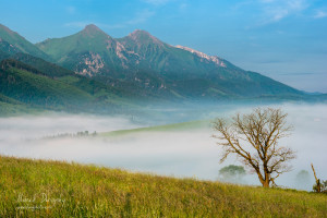 Belianske Tatry a starý strom