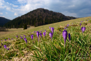 Jar na Voniarkach