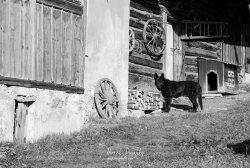 Čierny pes