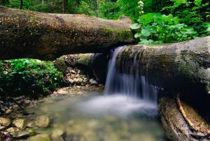 Zátišie na potoku