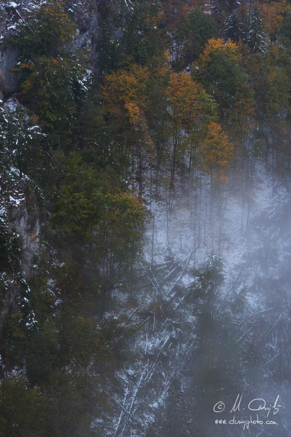 Jesenný les so snehom