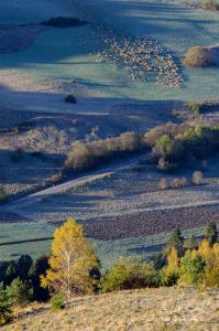 Ovečky pod Lesníckym sedlom