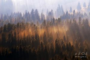 Svetlo lesa