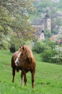 Koník v Brdárke