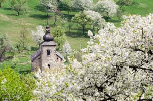Kostolík a rozkvitnuté čerešne v Brdárke