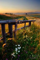 Letné ráno za dedinou