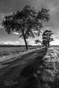 Stromy pri ceste