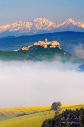 Stará hruška pod Spišským hradom