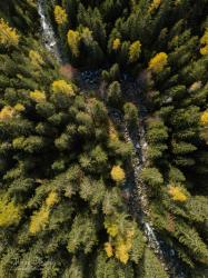 Rieka Poprad v horskom lese